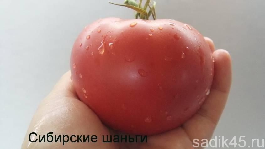 Томат сибирские шаньги характеристика и описание сорта