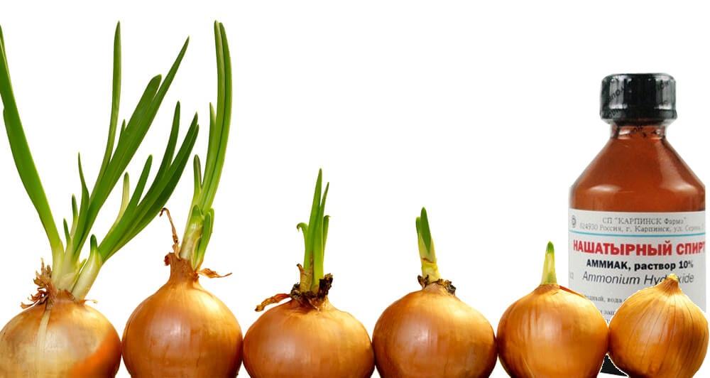 Основные рекомендации по борьбе с болезнями растений - советы от лигногумат | москва