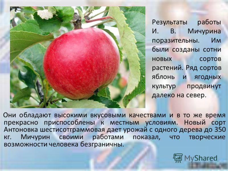 """Секреты успешного выращивания яблонь """"чемпион"""""""