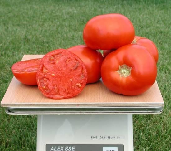 Томат санрайз f1: характеристика и описание сорта, отзывы, фото, урожайность