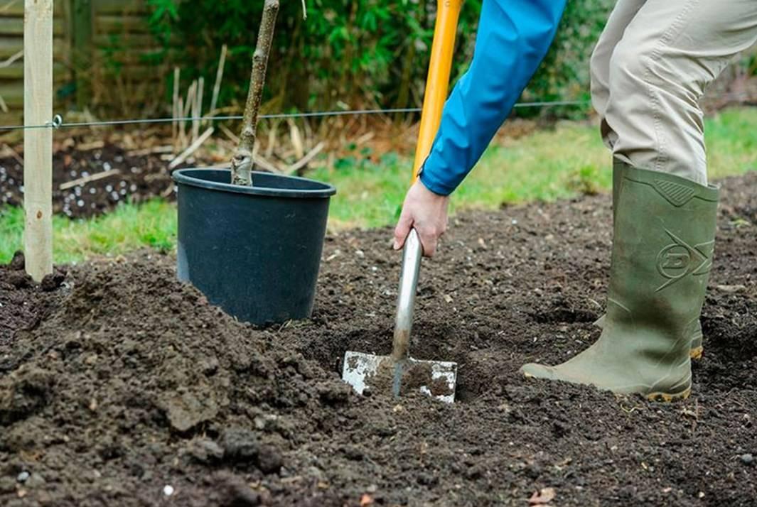 Какие пряные травы можно вырастить на огороде: 25 растений
