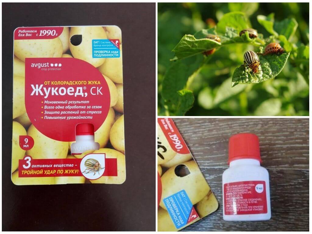 «жукоед» от колорадского жука: инструкция по применению, вред для человека и отзывы