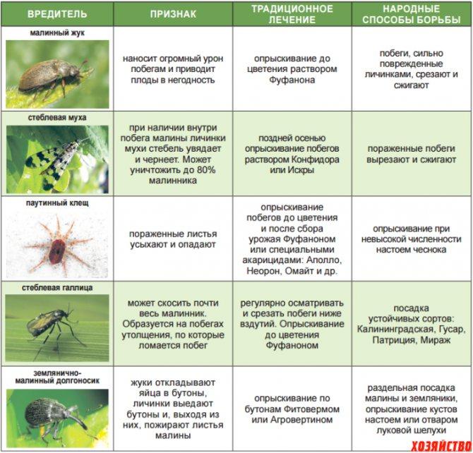 Болезни и вредители красной смородины, в том числе лечение и восстановление растений, а также сорта устойчивые к заболеваниям, с описанием, характеристикой и отзывами