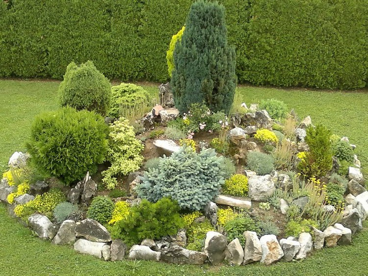 Декоративные кустарники (109 фото): лучшие сорта для сада. оформление дачных участков. как выбрать кусты для урала и сибири? правила посадки и ухода