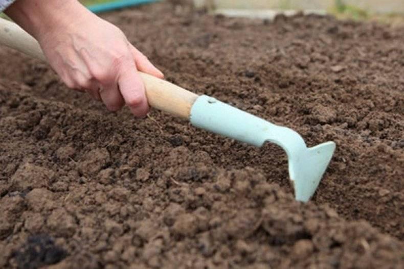 ✅ все об огородном хрене: сорта, как выкапывать, вредители и методы борьбы - tehnomir32.ru