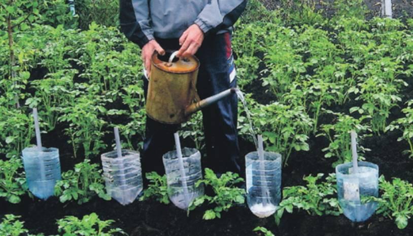 Капельный полив из пластиковых бутылок делаем своими руками