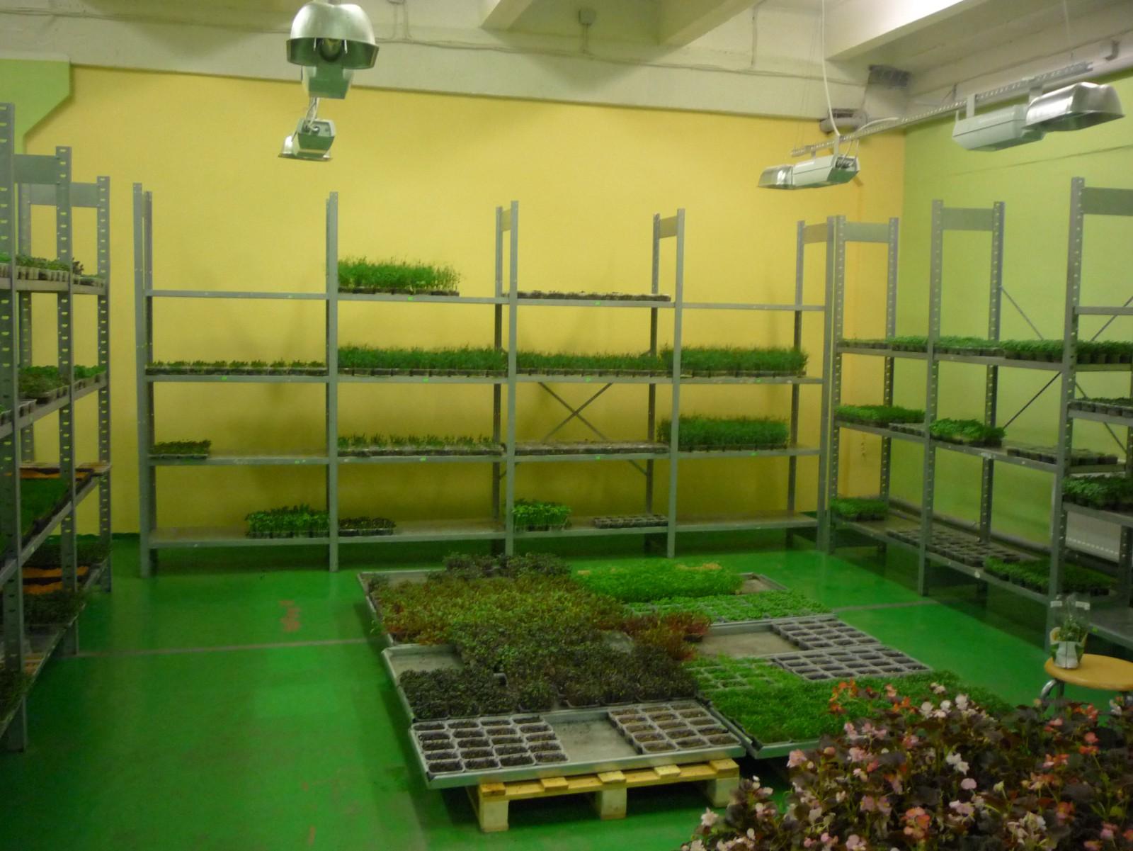 Выращивание овощей как бизнес с нуля в 2021 году. как сделать бизнес урожайным