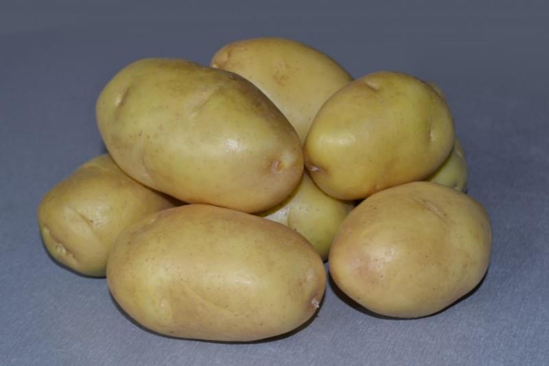 Картофель импала: описание сорта и характеристика