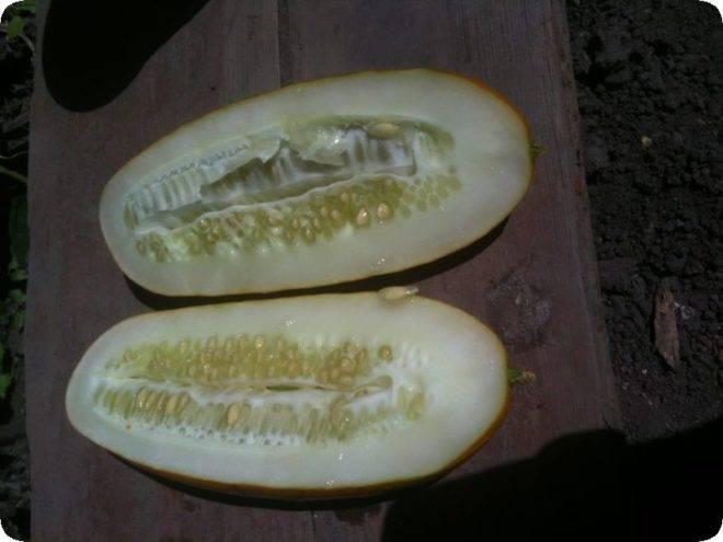 Подготовка семян огурцов к посеву: как прогревать, в чем протравить, нужно ли проращивать - дачные советы.ру