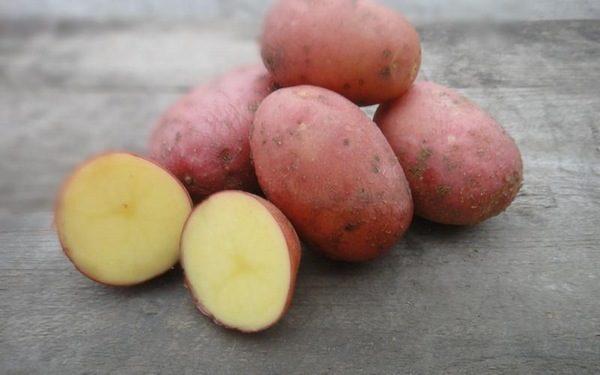 Сорт картофеля «лабелла»: описание высокоурожайной красавицы из голландии
