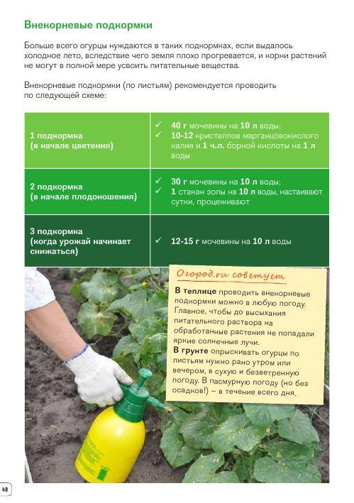 Пошаговое руководство применения мочевины в огороде