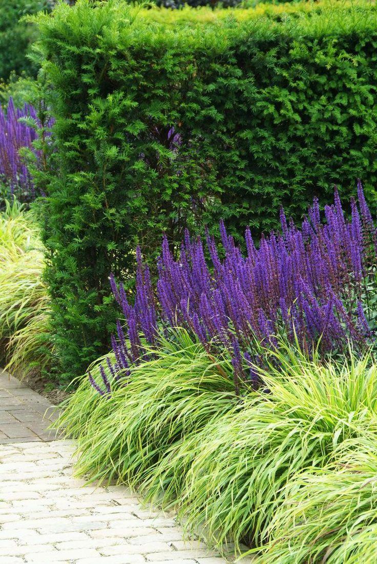 Лавандовый цвет и его сочетания   lookcolor