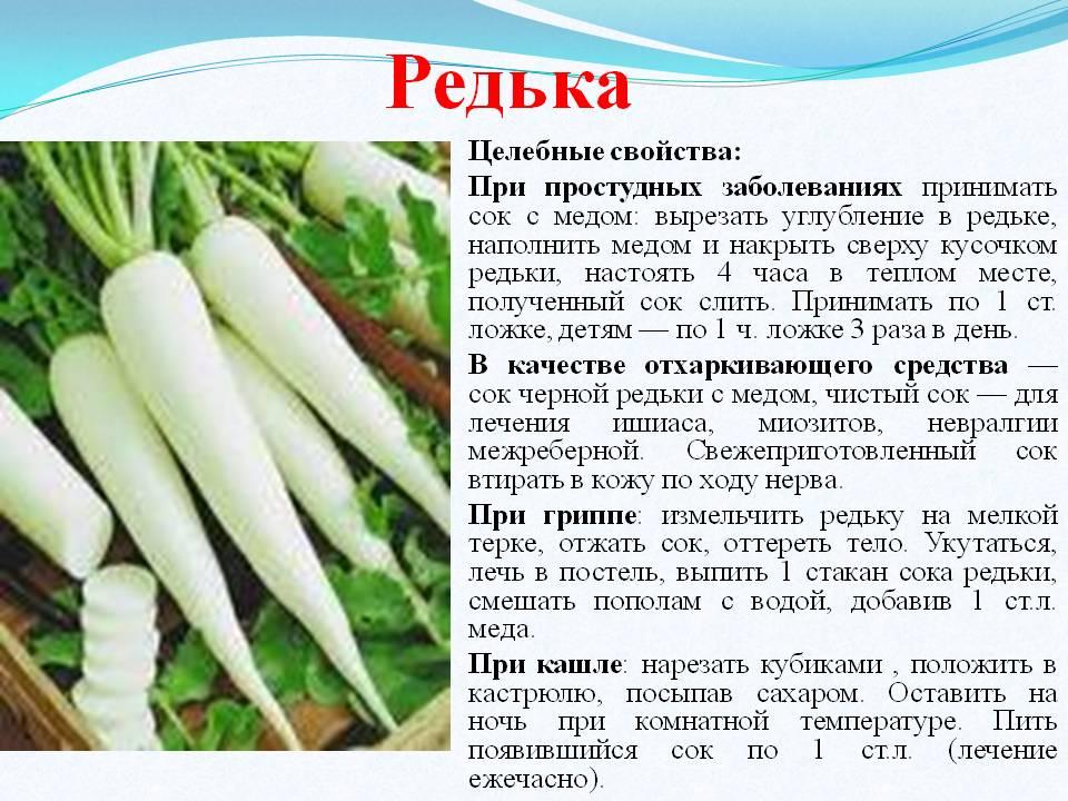 Дайкон его калорийность, польза и вред для организма