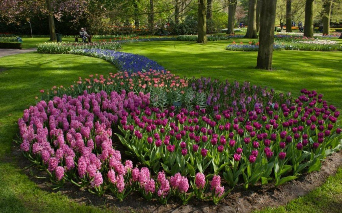 Клумба из тюльпанов: сорта и схемы посадки цветов