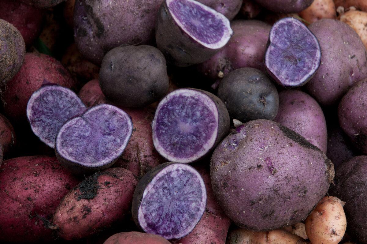 Полезные свойства фиолетового картофеля с антиоксидантной добавкой - здоровый, универсальный углевод