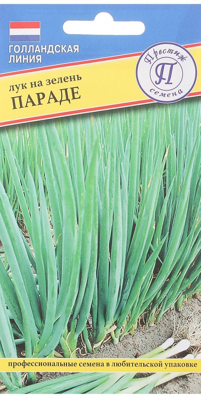 Когда сеять лук-батун под зиму: посадка семенами, уход в открытом грунте