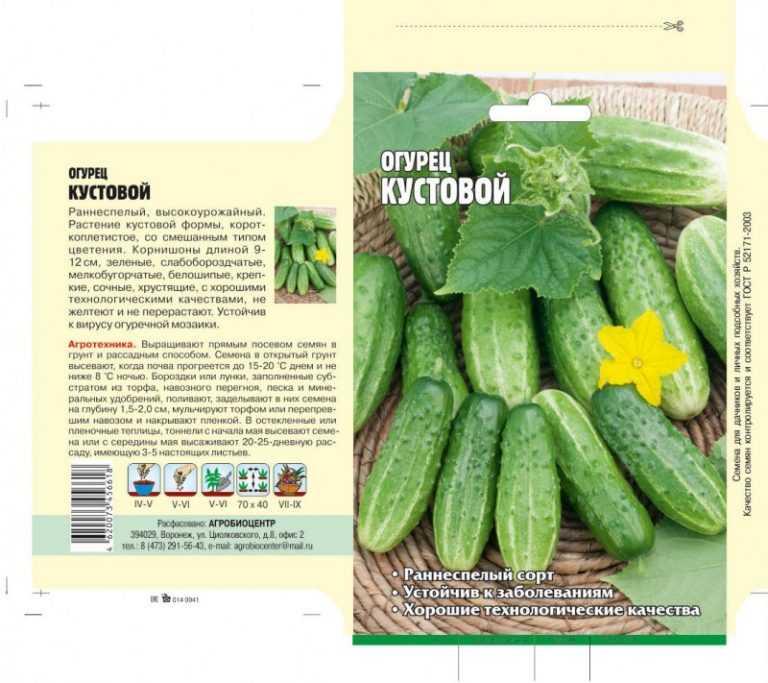 Тибурон огурец: описание, выращивание, уход, фото