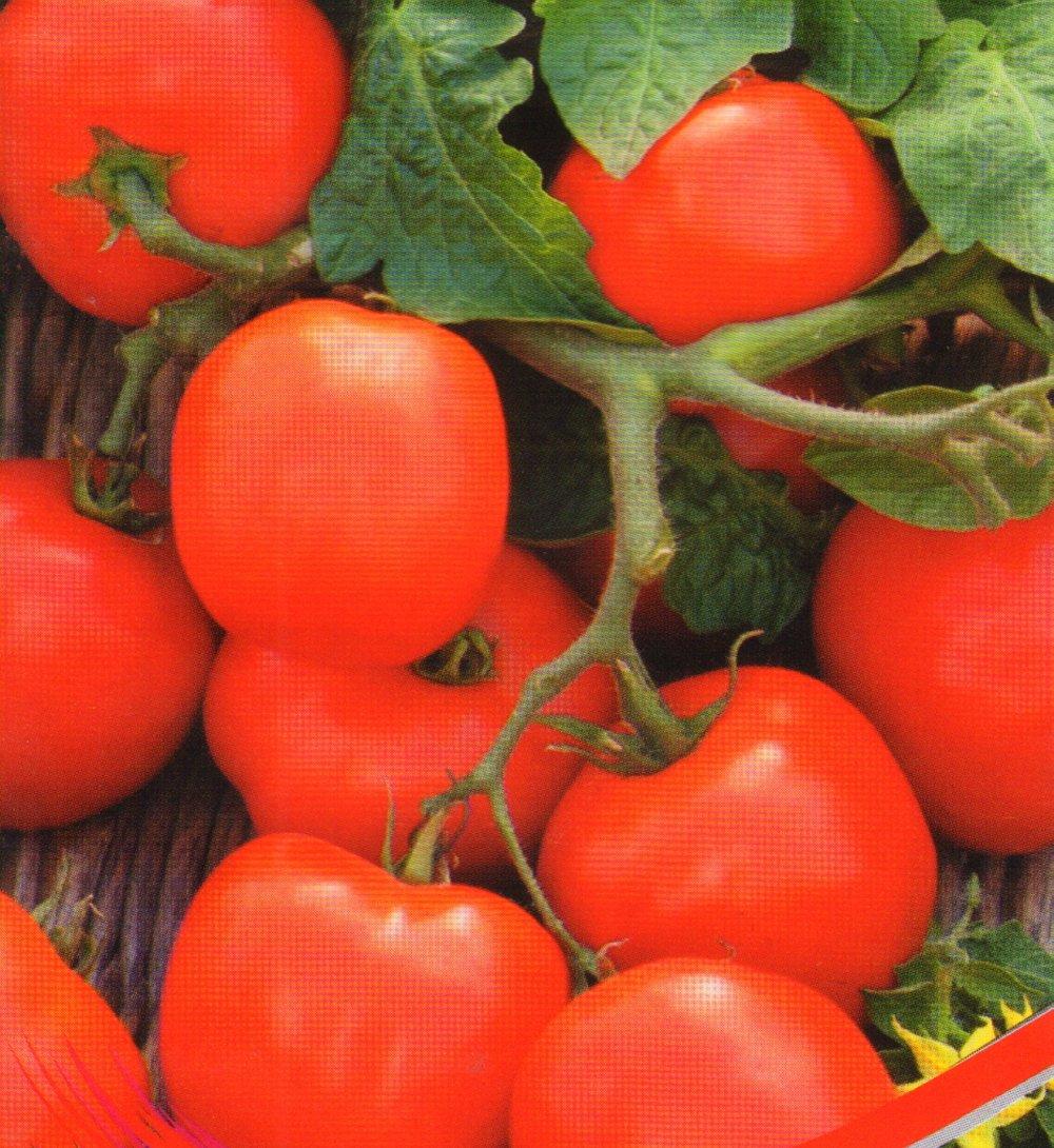 Гибриды помидор f1 - что это, чем отличаются от чистых сортов, достоинства недостатки