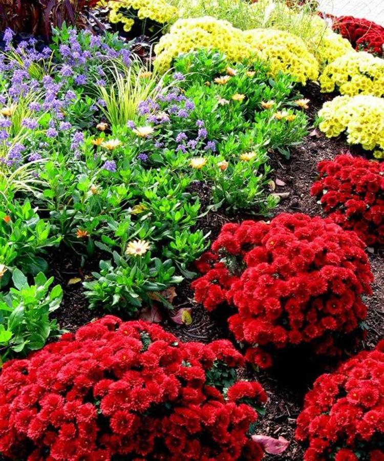10 лучших видов многолетних цветов для сибири и урала