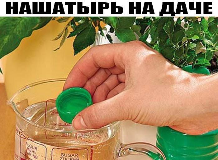 Полив моркови нашатырным спиртом - обработка, можно ли