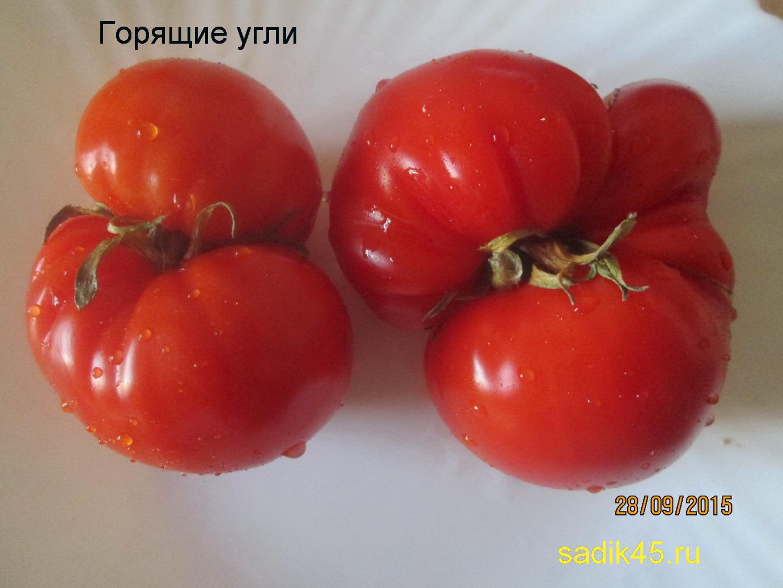 Описание томата жар птица и агротехника культивирования гибрида