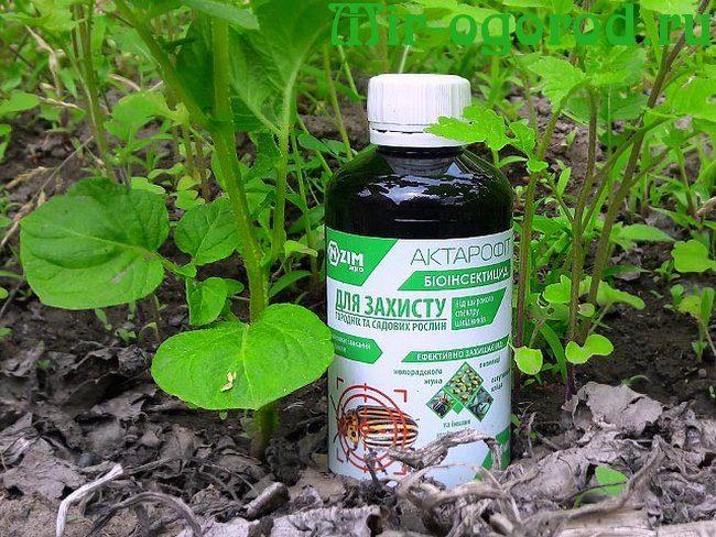 Как и чем лечить заболевания растений   что такое фунгициды и для чего их применяют   из чего состоит дачная аптечка