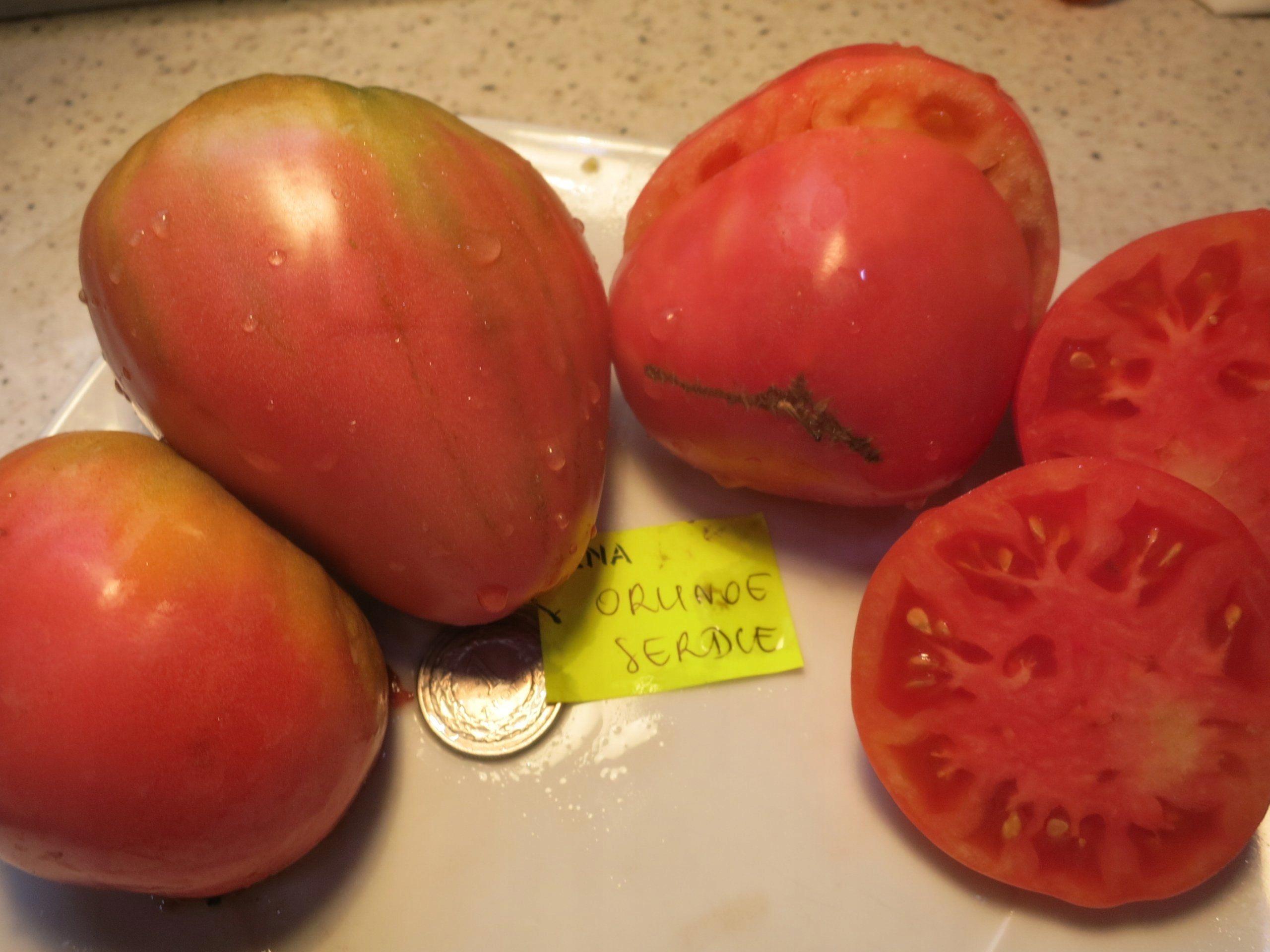 Описание и характеристика томата сорта «орлиное сердце»