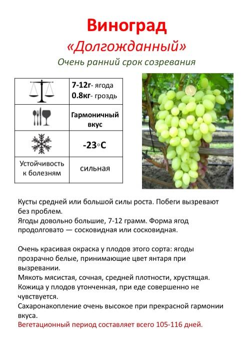 Сорт винограда «красотка», его описание и фото