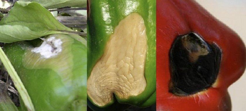 Лечение мастопатии народными средствами | компетентно о здоровье на ilive