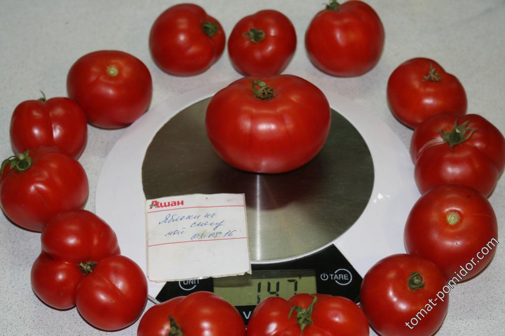Описание сорта томата яблоки на снегу, его характеристика и урожайность – дачные дела