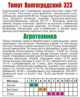 Томат волгоградский скороспелый 323: характеристика и описание сорта, урожайность отзывы фото
