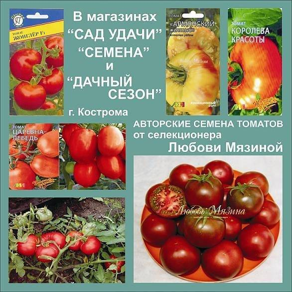 Описание сорта томата царевна лебедь, его характеристика и урожайность - всё про сады