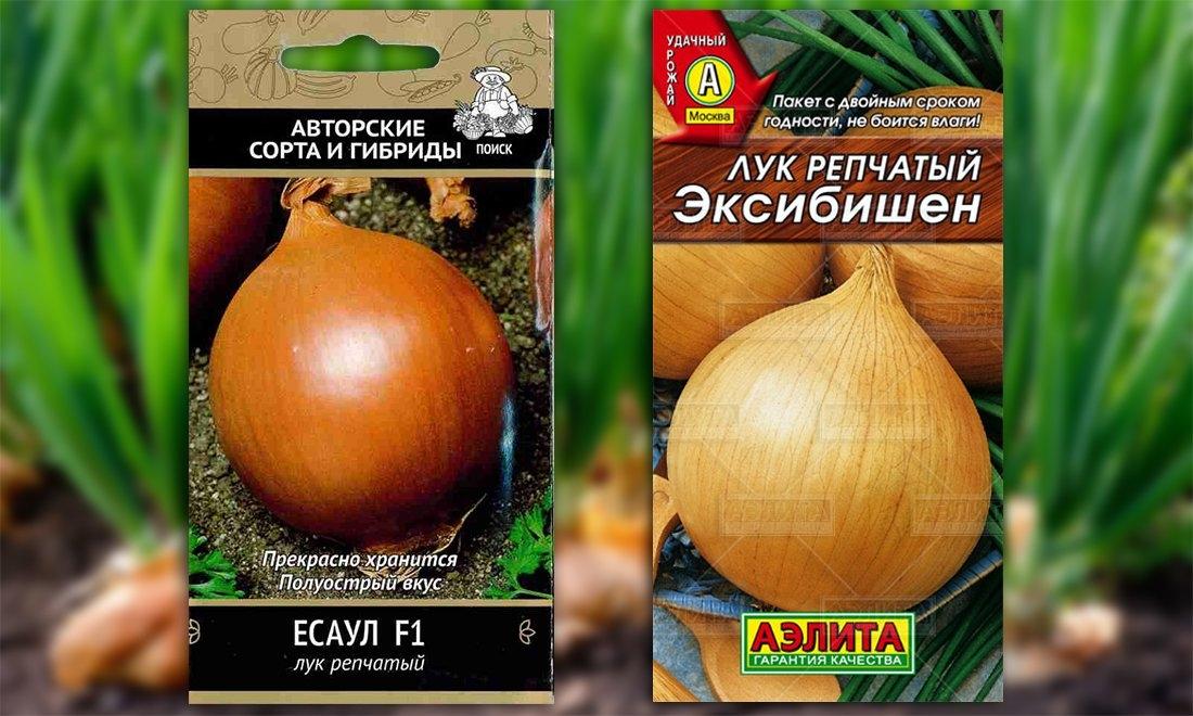 Сорта и виды лука - фото с названиями и описанием характеристик