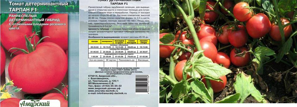 Особенности томата индио f1 и рекомендации по выращиванию рассады