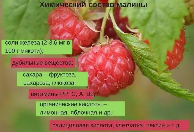 Желтая малина: полезные свойства и противопоказания, чем полезны ягоды для организма