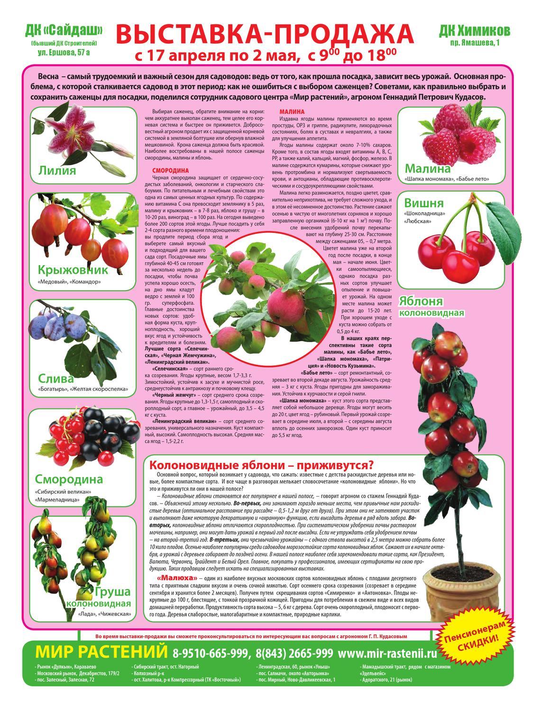 Лучшие сорта винограда для средней полосы россии: выбираем столовые, неукрывные и ранние сорта
