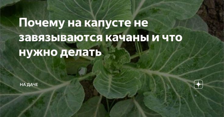 Чем подкормить капусту для завязывания кочана (4 совета)
