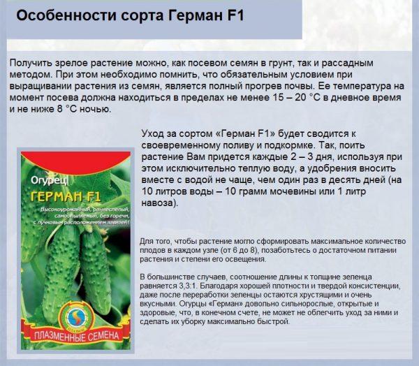 Капуста мегатон — самый урожайный среднепоздний гибрид