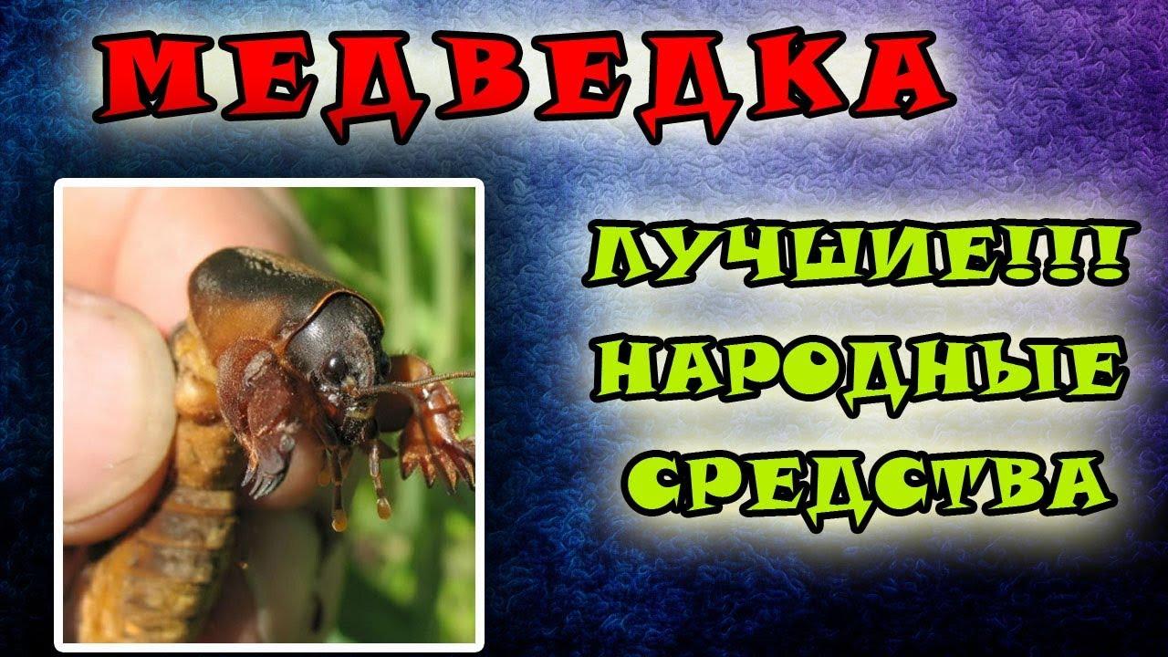 Медведка: как бороться на supersadovnik.ru