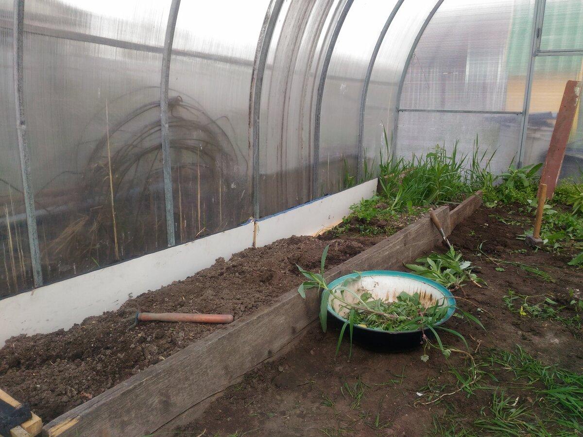 Грунт для огурцов в теплице: требования к почве и инструкция по её подготовке, дальнейший уход