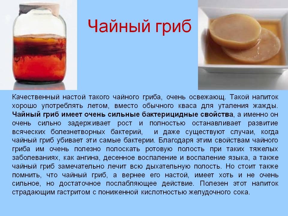 Тибетский молочный гриб для похудения. - советы народной мудрости - медиаплатформа миртесен