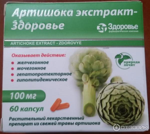 Полезные свойства артишока полевого и противопоказания для здоровья организма человека