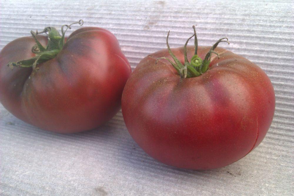 Томат томск: характеристика и описание сорта, урожайность, фото, отзывы