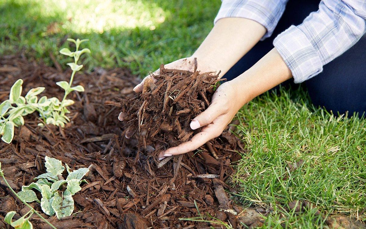 Мульчирование почвы (плюсы и минусы) 7 правил мульчирования