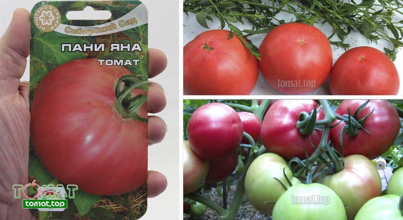 Томат пани яна: характеристика и описание сорта, отзывы, фото, урожайность - все о помидорках