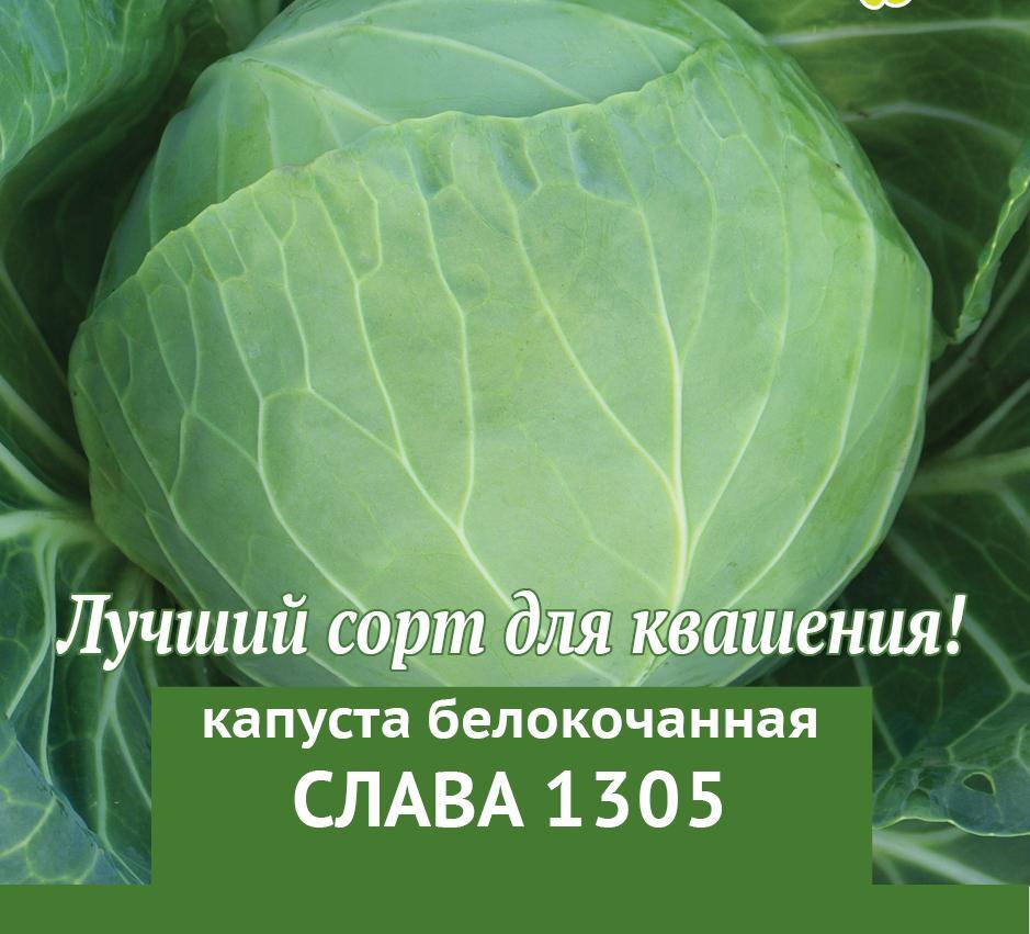 Капуста слава белокочанная 1305: описание и методы приготовления, включая засолку, а также как она выглядит на фото и как отличить ее от других сортов? русский фермер