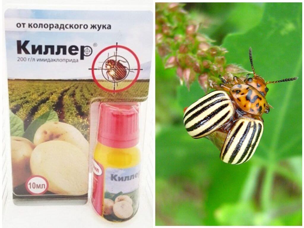 Средство бусидо от колорадского жука: инструкция по применению, правила обработки, отзывы