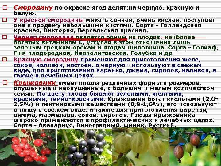 Почему не плодоносит черная смородина: что делать если нет ягод?