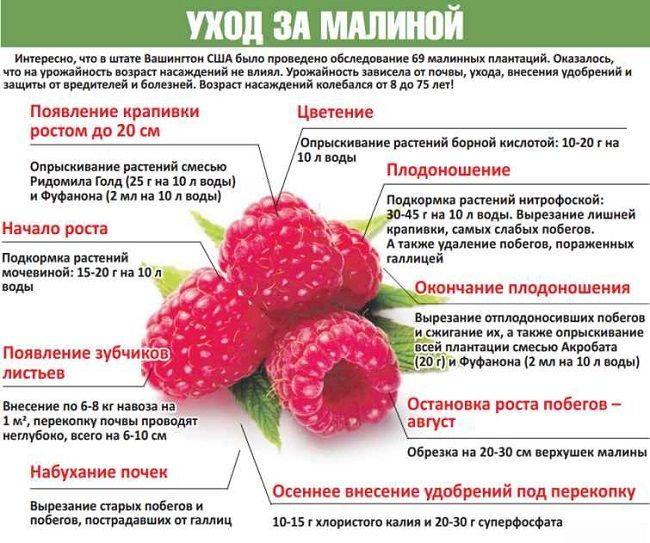 Обрезка вишни весной: схема для начинающих с подробным описанием, сроки