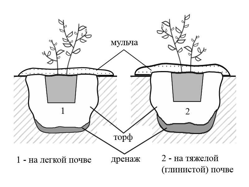 Какая должна быть кислотность почвы для голубики?